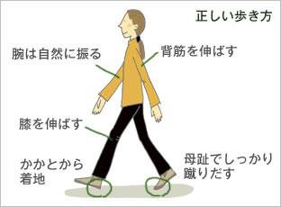 正しい歩き方/腕は自然に振る/背筋を伸ばす/膝を伸ばす/かかとから着地/母趾でしっかり蹴りだす